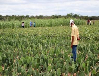 Agricultores de Arcoverde começam a receber o Garantia-Safra