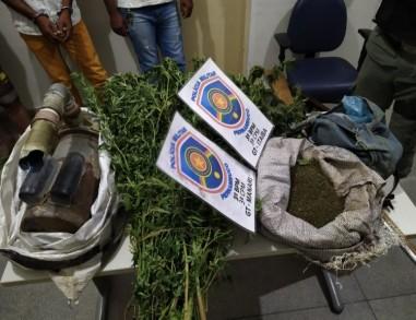 Trio é preso após polícia encontrar plantação de maconha e armas em Manari